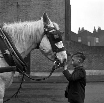 A young boy strokes horse. c.1955