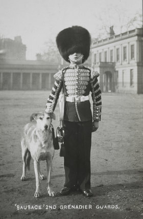Sausage€™ the Grenadier Guards regimental mascot with a bugl