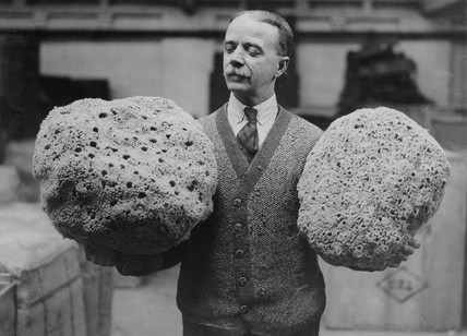 Cutler Street Warehouses 1933: Giant Mediterranean sponges