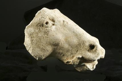 Fragment of a horse's head: 16th century