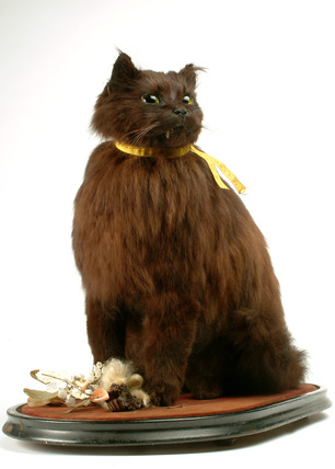 Oliver - preserved cat: late 19th-early 20th century