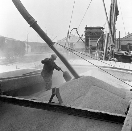 Grain imported from Australia is unloaded onto barges at Millwall Docks: 1958