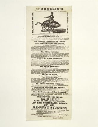 The Industrious Fleas: 1836