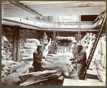 Mutton on a conveyor in a ship's hold: 20th century