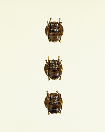Set of dress gold studs in the shape of spiders: 19th century