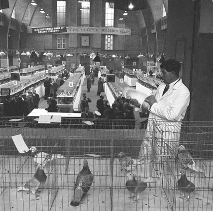 The International Show of Racing Pigeons: 1960