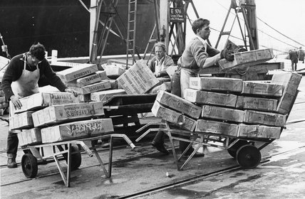 Boneless beef from Australia being unloaded, Royal Albert Dock: 1966