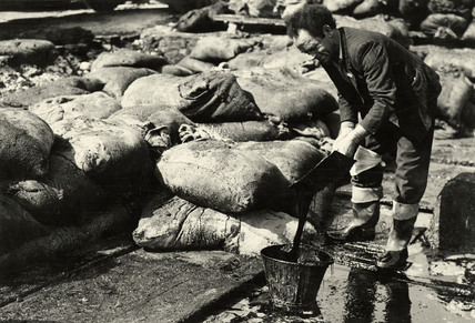 Sugar salvage during World War 2; c.1940