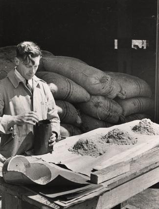 Sugar Sampler: 1950