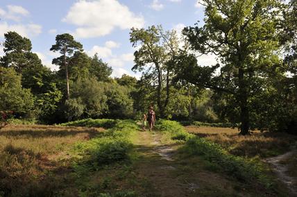 Petts Wood; 2009