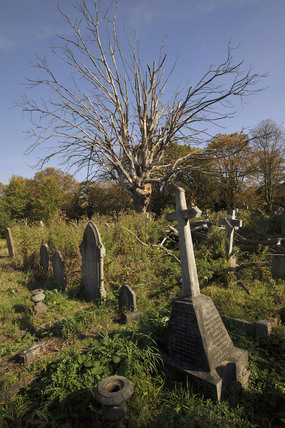 Ladywell Cemetry; 2009