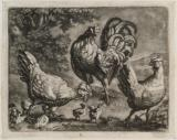 Cock with hens and chicks