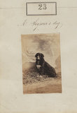 Henry Ker Seymer's dog