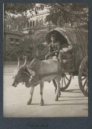 'Madras'