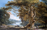 An Ancient Beech Tree, by Paul Sandby