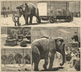 Myers' American Circus Auctioned