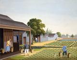 Farmers applying fertilizer onto the fields, by Jun Wu