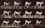 Child Crawling, photo Eadweard Muybridge