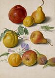 Apples, Pears & Figs, by Johann Jakob Walther