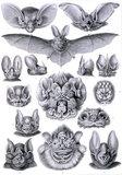 Bats, Kunstform der Natur