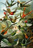 Birds, Kunstform der Natur