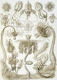 Jellyfish, Kunstform der Natur