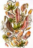 Marine Flora, Kunstform der Natur