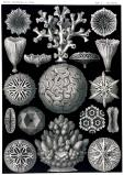 Coral Formations, Kunstform der Natur
