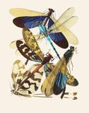 Papillons, by E.A. Séguy