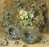 Primroses and Bird's Nests, by William Henry Hunt