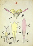 Compound Flower, by Christopher Dresser