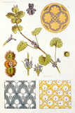 Ground Ivy and Ivy Ornamental Decoration, by F.E.Hulme