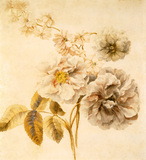 Roses and other flowers, by Mary Moser