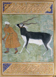 Indian Black Buck, by Manohar