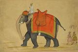 Elephant Guth Gaj