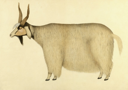 A Shawl Goat, by Zayn al-Din