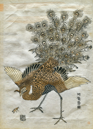 A Peacock and a Mole Cricket, by Isoda Koryusai