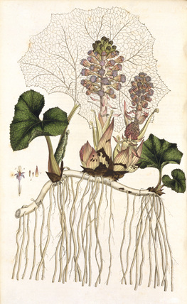 Flora Londinensis, by W.Curtis