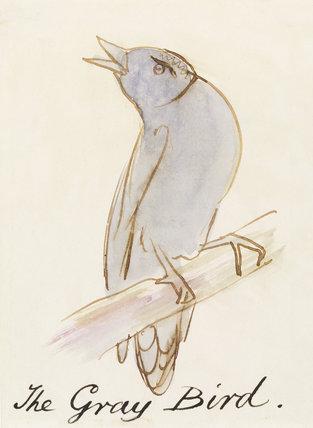 The Grey Bird