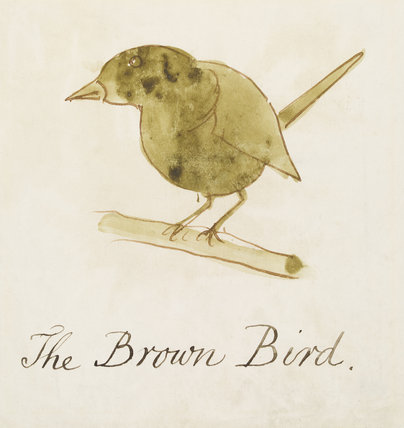 The Brown Bird