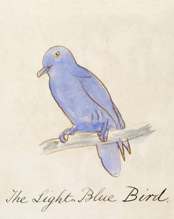 The Light Blue Bird