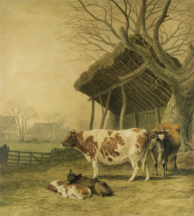 Alderney Cows & Calves, by Robert Hills
