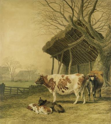 Alderney Cows & Calves, by Robert Hills