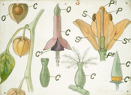 Diagram illustrating Lectures on Botany at Marlborough House, by Christopher Dresser