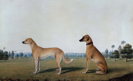 Two dogs in a meadow landscape