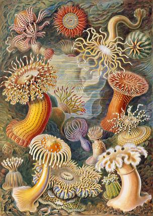 Sea Anemone, Kunstform der Natur