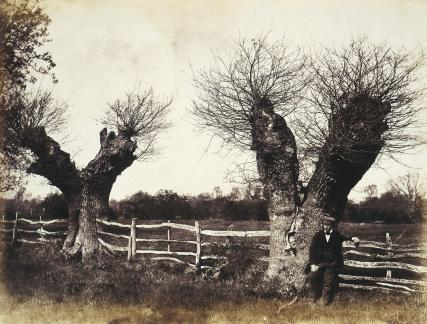 Hedgerow trees, Clerkenleap, by Benjamin Brecknell Turner