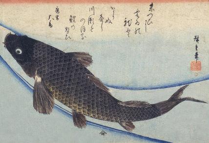 A carp, by Utagawa Hiroshige