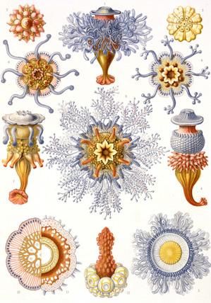 Marine Fauna, Kunstform der Natur