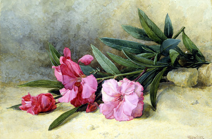Oleander, by Mary E. Butler